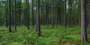 forestry_commission-_mhillier-_photopin