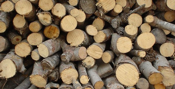 production of timber